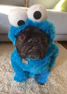 Can I have a cookie? HAHAHAHA