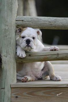 Dog-tired of waiting...