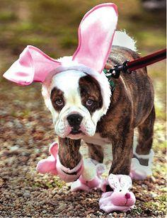 Easter puppies! Oh my goodness...