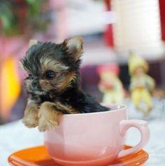 im about to fain again from cuteness overload....where is my smelling salt!!!!