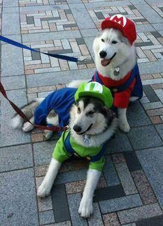 Mario Brothers Dog costumes