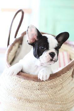 Mindy- That's really cute. Here's a tip though. Don't try to out cute the cutest person in this office. #themindyproject TUE 9:30/8:30c   FOX: French Bulldogs, Mini French Bulldog, Puppy, Box, French Bulldog Puppies, Frenchie Pup, Frenchie Bul