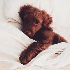 Pinterest: kylizzlerussett☽: Animals, Dogs, Pets, Puppys, We Heart It, Adorable, Box, Baby, Tiny Puppies