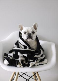 Pup// In need of a detox? Click on this photo to get 10% off your teatox using our discount code 'Pinterest10' on www.skinnymetea.com.au X