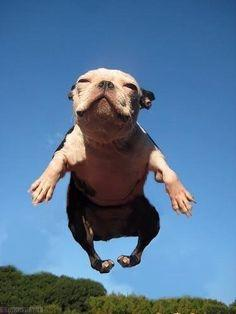 super dog Dog jumping leaping.