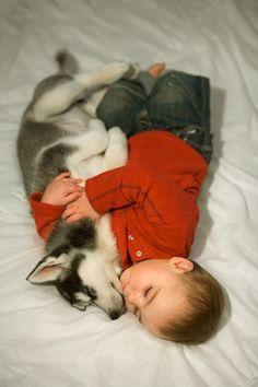 There is nothing like snugglin with a husky. Theyre just like cuddlin with a big soft stuffed animal