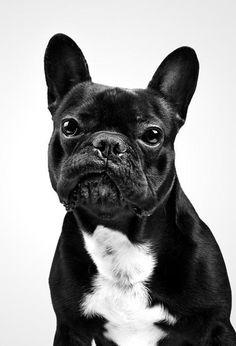 too much black for my puppy but still it works! so cute!! i love me my boston terrier!