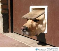Google Image Result for http://cdn4.aplacetolovedogs.com/wp-content/uploads/doggie-door-mishap.jpg