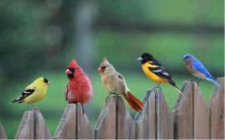 I have all these birds in my back yard habitat. Check my pin sights to see how you can attract these beautiful creatures. Can be as simple as offering black-oil sunflower seeds, chopped peanuts or suet. Place a birdbath in the yard. It's that easy!!!