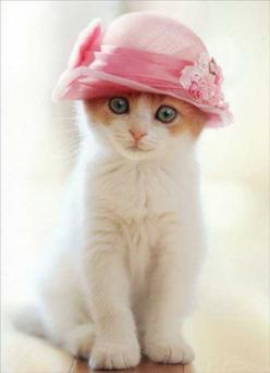In my Easter bonnet, with all the frills upon it, I'll be the grandest kitty in the Easter parade.