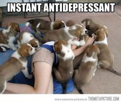 this was me today haha totally understand how impossible it is not to shriek with laughter... And that's when there's only one!: Animals, Puppies, Dogs, Stuff, Pet, Puppys, Funny, Things, Antidepressant
