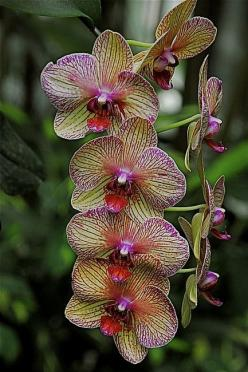 Blooming Beauties: Nature, Purple, Plants, Beautiful Flowers, Beautiful Orchids, Flowers, Garden, Orquidea