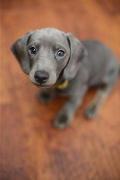 I've never seen one this color before!  I do believe I need one!: Animals, Sweet, Dogs, Pet, Puppys, Box, Baby, Friend, Eye
