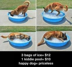 German Shepherd, hot day, ice = happy puppy!: Doggie, Animals, Idea, Pets, Funny, Puppy, Happy Dogs, German Shepherd
