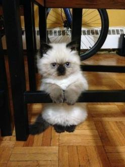 I've never seen cats do this before...,   but it's really cute.