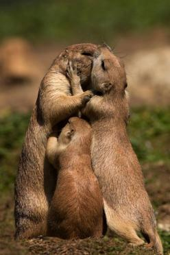 This is Me, Melina and Josie!!!!Happens every time we go for a hug, here she comes squeezing in. Wouldn't have it any other way, though. Family hug... Bobby's taking the picture!!!!: Prairie Dogs, Animals, Sweet, Group Hug, Families