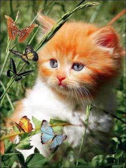 What was that orange flower I ate?  Why is their a train eating my tail,........what's that, omg, it's, it's   RUN NOW.: Cats, Animals, Kitty Cat, Sweet, Butterflies, Adorable, Kittens, Photo
