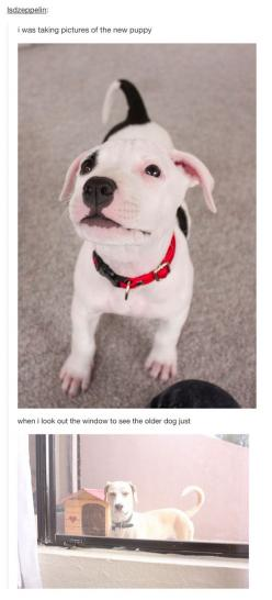 37 Times Tumblr Told The Truth About Dogs - somebody's a bit jealous: Bit Jealous, Funny Truths, Puppies And Dogs Funny, Dogs Quotes Funny, Funny Tumblr, Funny Quotes About Dogs, Animal, 37 Times