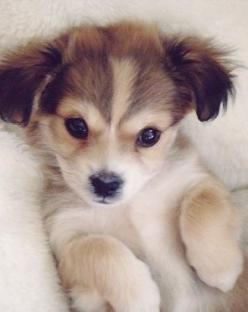 Snuggle Time?: Animals, Cute Puppies, Cuteness, Sweet, Dogs, Pets, Puppys, Box, Baby