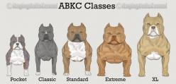 american bully - Google zoeken: American Bullies Pitbulls, Animals Dogss, Pitbulls Dogs, Abkc Classes, Pit Bull, Dogs Breed Abkc, Bully Classes, Grr Animals, American Bully Puppy