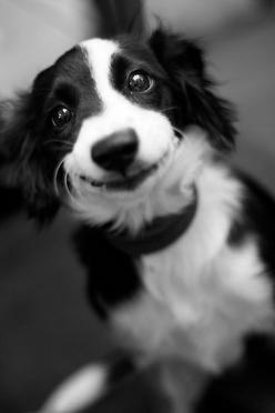 :): Happy Smile, Doggy Smile, Happy Puppy, Sweet Smile, Funny Faces, Smiley Puppy, Happy Dogs, Border Smile