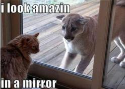 30 Funny animal captions - part 11, funny meme pictures, funny memes, animal memes, animal pictures with captions: Amazing, Mirror, Funny Animals, Cats, Funny Stuff, Humor, Funnies, Mountain Lion