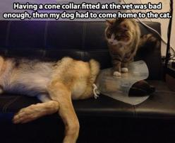 30 Hilarious Struggles Dog Owners Understand Too Well.: Cats, Animals, Dogs, Adding Insult, Pet, Funny Stuff, Funnies, Funny Animal