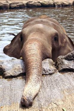 An #elephant relaxing in the water on a hot day.  LOL!!!: Animals, Sweet, Baby Elephants, Elephant, Pet, Ellie, Things