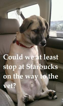 Best face ever!: Animals, Dogs, Stuff, Pet, Funnies, Funny Animal, Starbucks