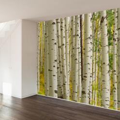 Birch Forest Wall Mural Decal: Forests, Interior, Birches, Wall Murals, Decal Wallsneedlove, Forest Wall Mural, Art Wall