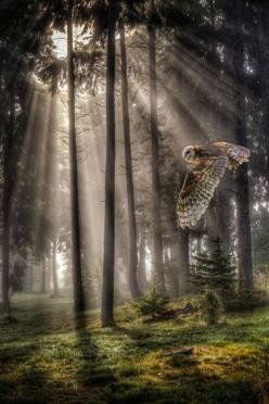 ♂ Bird Owl mist forest by: John Mattatall: Animals, Nature, Pictures, Forest, Things, Birds, Owls, Photography