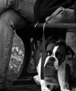Boxer | puppy | dog house | hound | black & white photography | too cute | mans best friend | eyes | look: Boxer Dogs, Dog Houses, Baby Dogs, Boxers, In The Dog House, Photo, Boxer Babies, Animal
