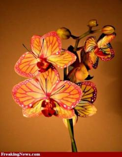 Butterfly Orchid: Exotic Orchids, Butterflies, Butterflyorchid, Beautiful Flowers, Gardening, Beautiful Orchids
