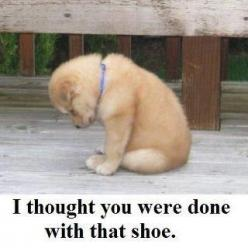 CLEAN funny pictures and jokes - Page 70 - Cincinnati Bengals Message Boards - Forums: Animals, Sweet, Dogs, Guy, My Heart, Thought, Puppy