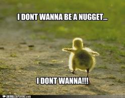 cute animals with captions - Google Search   We Heart It: Animals, Funny Stuff, Funnies, Humor, Funny Animal, Don T Wanna