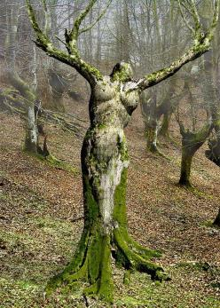 Designed by Mother nature: Mothernature, Mothers, Beautiful, Art, Trees, Things, Garden, Photo, Mother Nature