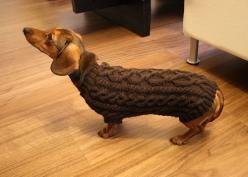 Don't you think Peanut Louise would lood smashing in this sweater? Notice the dog in the picture has her tail tucked waaaay between her legs.: Animals, Doxie Sweater, Free Pattern, Sweater Patterns, Dachshund, Dog Sweaters
