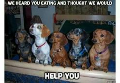 :)  funny    http://bulldogvitamins.blogspot.com/2014/12/homemade-stew-for-dogs.html: Puppies, Funny Dogs, Weenie Dog Funny, Dachshunds Funny, Doxies, Funny Animals For Kids, Wiener Dogs, Weenie Dogs Funny