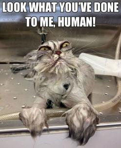funny pictures of cats ~OMG! That cat!~: Cats, Animals, Wet Cat, Funny Stuff, Humor, Funnies, Funny Animal