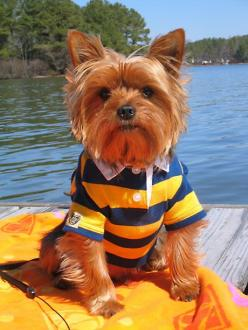 Great American Pet Photo Contest...1000$ Cash Price For The Winning Pet... Submit Your Pet Photos Here.... http://petphoto-contest.website.org: Doggie, Animals, Dogs Yorkshireterrier, Pet Dogs, Yorkshire Terrier, Pets, Lake, Yorkshireterrier Yorkie