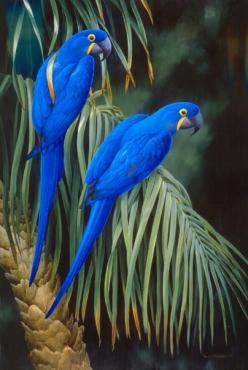 Hyacinth Macaw: Animals, Nature, Poultry, Color, Blue Parrots, Beautiful Birds, Photo