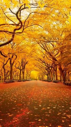 New York in Autumn.. classic Central Park.: Centralpark, Tree, Autumn, Parks, Fall, New York, Central Park, Place