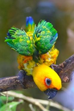Nice bird ~ Dreamy Nature: Jenday Conure, Baby Parrot, Beautiful Birds, Conure Parrot, Animal
