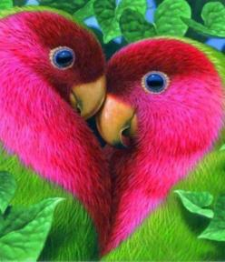 No wonder there called lovebirds--Yes these are actually what real lovebirds look like!: Animals, Nature, Color, Beautiful Birds, Photo