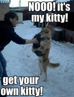 nooo! it's my kitty! get your own kitty!: Cats, Funny Animals, Dogs, Pet, Funny Stuff, Humor, Funnies, Kitty