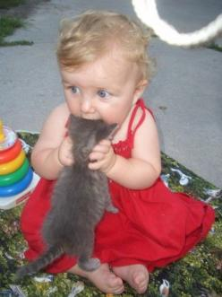 pretty much what I want to do every time I see a really cute kitten... or kid for that matter. It's probably good I don't have cute children of my own.: Cats, Animals, Kitten, Funny, Poor Kitty, Baby, Nom Nom, Kid
