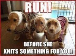 Revolt on wiener knits! #dogs #pets #Dachshunds Facebook.com/sodoggonefunny: Funny Animals, Dogs, Dachshund, Pet, Knitting, Doxies, Humor, Funnies