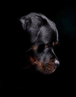 Rottweiler.  I wish I would have taken a pic like this before my baby girl passed. ♥: Rottweilers, Animals, Dogs, Pets, Rottweiler S, Friend, Rottie S