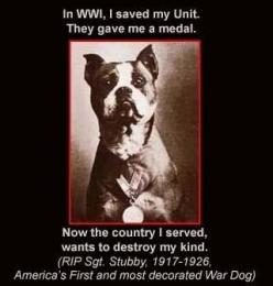 Sgt. Stubby - Honor your Veterans America!  Pitties are not bad dogs!  They just have some bad owners!!!: Animals, Dogs, Hero, Pet, Pittie