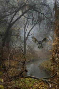 Swooping Owl, Russian Federation  photo via cathy: Animals, Beautiful, Art, Forest, Photo, Birds, Owls, Fairytale